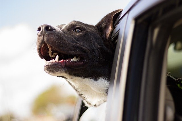 5 steps to prepare your pet for relocation
