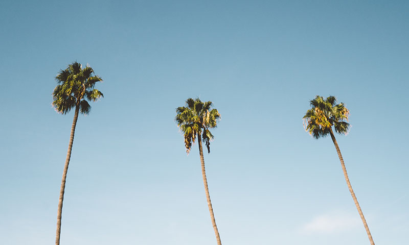 san-diego-palm-trees