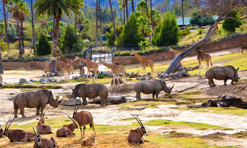 san-diego-wild-animal-park