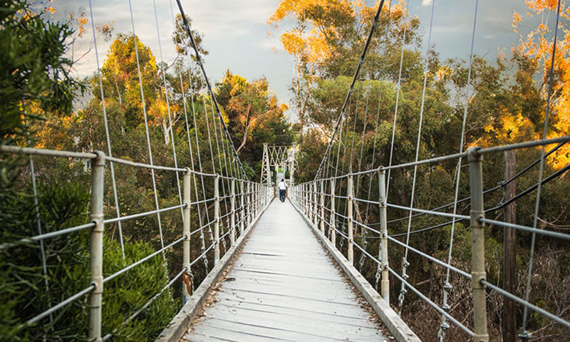 spruce-street-suspension-bridge