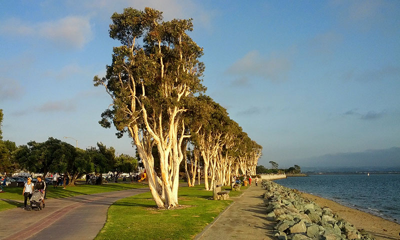 Trees_in_Chula_Vista_Bayfront_Park