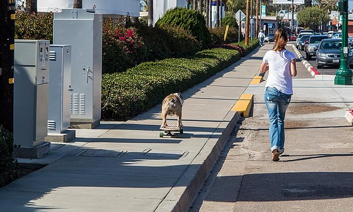 sidewalk-dog-board.jpg