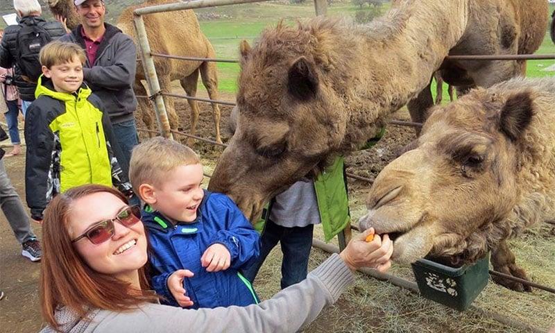 oasis-camel-dairy copy