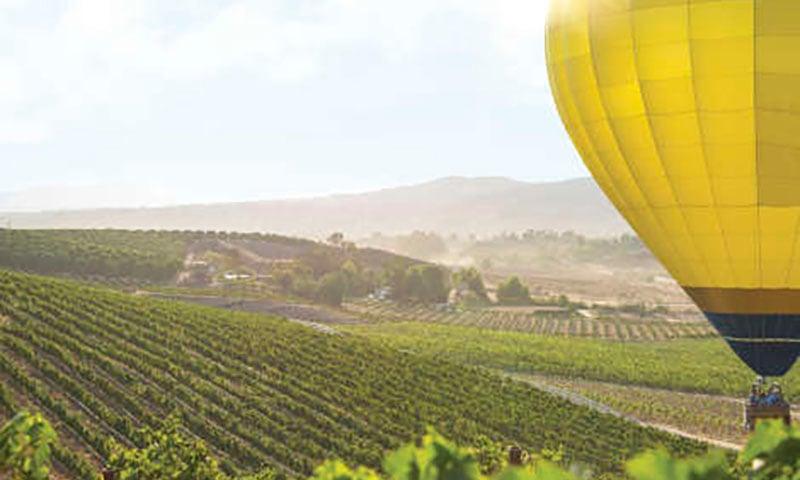 hot-air-baloon-vinyeard-temecula copy