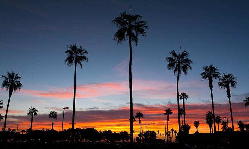 trees-sunset.jpg