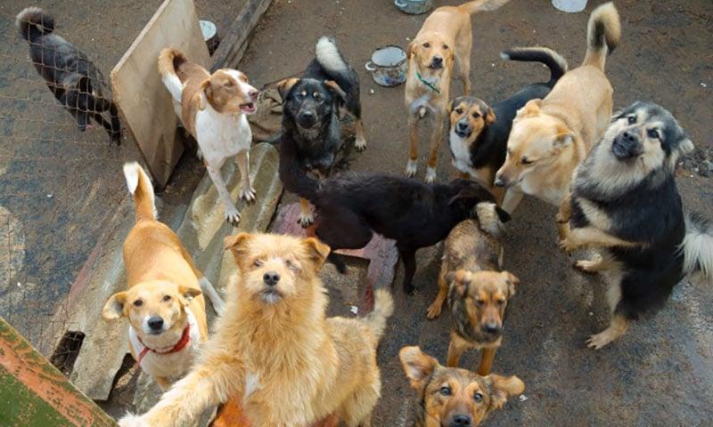 Pet hoarding dogs