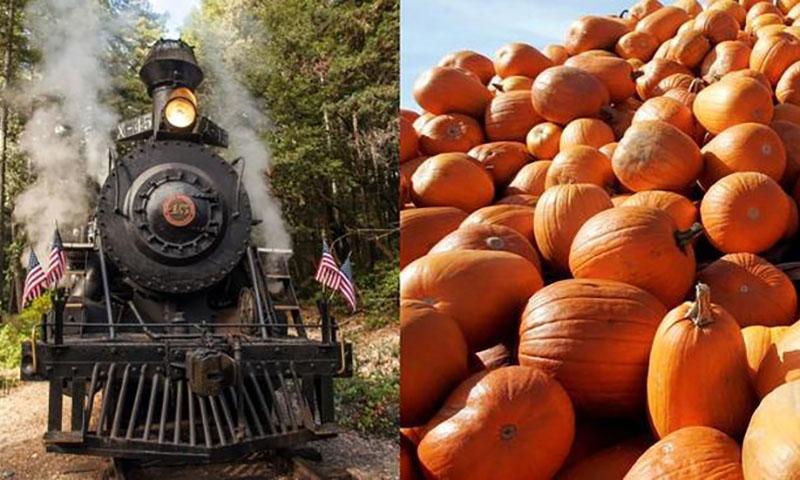 pumpkin-express