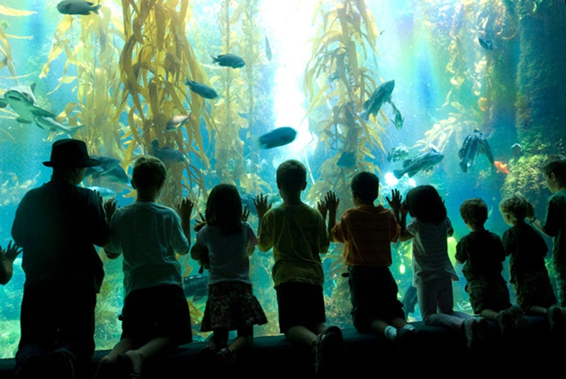 Birch-Aquarium-children-Courtesy-Birch-Aquarium-1